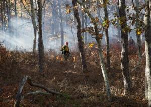 Controlled burn on Cape Cod