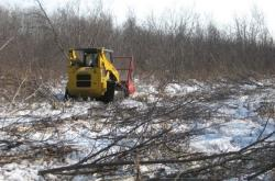 Shearing alder on Ackley Wildlife Area