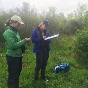Biologist Linnea Rowse surveys site for golden-winged warblers