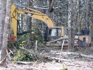 Creating New England cottontail habitat on Eppley Wildlife Refuge in Rhode Island