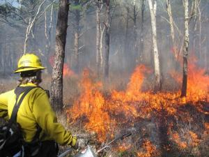 Prescribed burning to create wildlife habitat