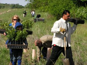 Planting shrubs in fields makes new young-forest habitat.