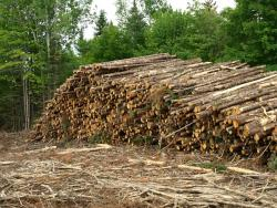 Weyerhaeuser Company, Northern Maine | youngforest org