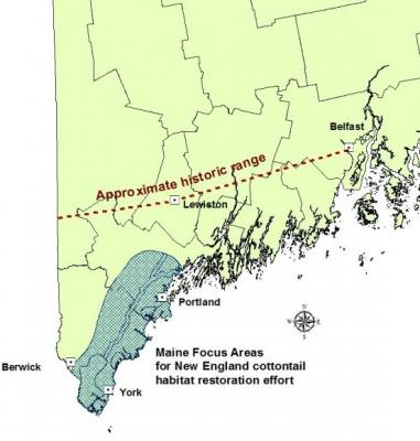 Maine focus areas for New England cottontail restoration