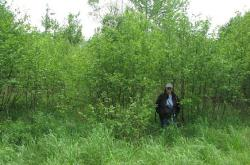 Thick alder stand following management