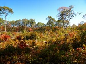 habitat at Narrow River Land Trust