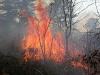 Controlled burning is another tool for making young forest.
