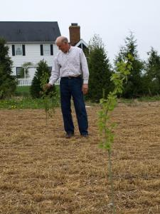landowner with newly planted aspen