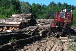 Timber harvest yields valuable renewable products