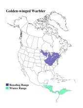 Golden-winged warbler range map