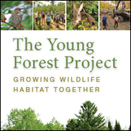 Young forest brochure thunbnail image
